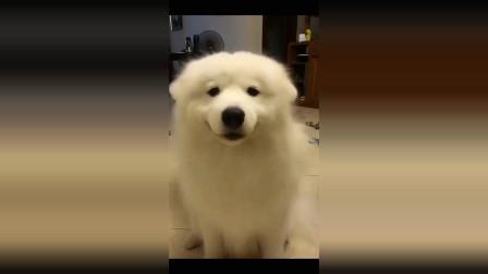 怎么练的狗狗耳朵跟着音乐的节奏一起动,好可