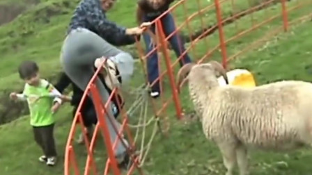 搞笑动物合集:妹子,你怕是跟这羊有仇!
