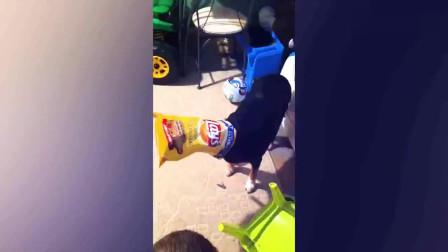 老外搞笑视频,宝宝和狗狗这是怎么了,让人忍