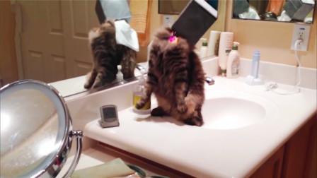 宠物搞笑视频 当猫咪头被套住之后 猜猜都有什么
