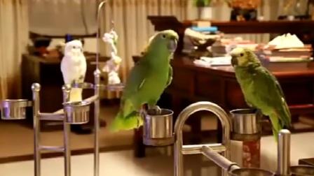 搞笑视频集锦,这只鹦鹉成精了,唱歌还能串烧