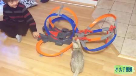 搞笑动物合集:把玩具当老鼠的猫咪,真呆萌!