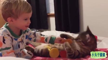 搞笑动物合集:陪小主人玩耍的猫咪,好有爱!