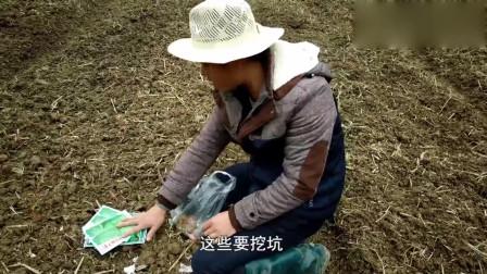 农村小伙种菜日记第五天:播种还不忘自我娱乐
