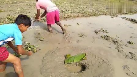 农村孩子都会制作陷阱捕捉野生塘鲺,这就是他