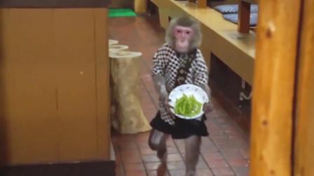 """日本""""打工猴"""",干了30年,只要香蕉不要工资!"""