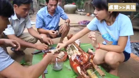 美女自制烤全猪,一群人围起来吃,这厨艺不是