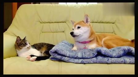 现在的猫咪和狗狗可以这样相处了吗?看看这日