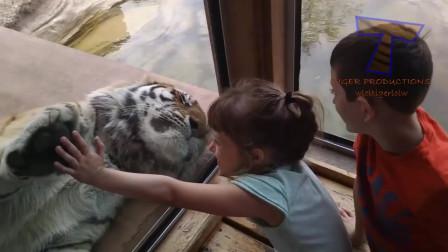 小萌娃和各种动物的搞笑视频,56秒的小萌宝好欢