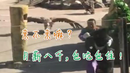重庆方言搞笑动物配音,这黑熊怕是要遭豁惨了