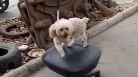 这狗狗不去酒吧打碟可惜了