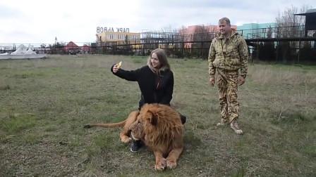 美女作死骑着狮子自拍,意想不到的事情发生了