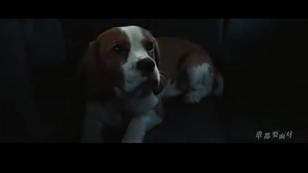 刘宪华献唱《一条狗的使命2》 主人表白离世爱犬戳泪点