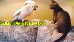 搞笑动物配音,猫咪不愧宠物一霸,在家时谁都