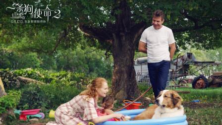 今夏最强催泪弹,《一条狗的使命2》今日上线:看一条狗哭成狗