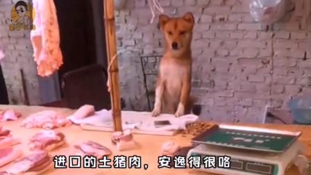 再来一波重庆方言搞笑动物配音!你们稳住,不