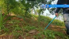 国内主播挑逗泰国圆斑蝰 肾亏蛇  全过程非常惊险