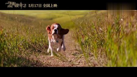 一条狗的使命2:最萌爱神版预告,太暖了,治愈你孤独的心!