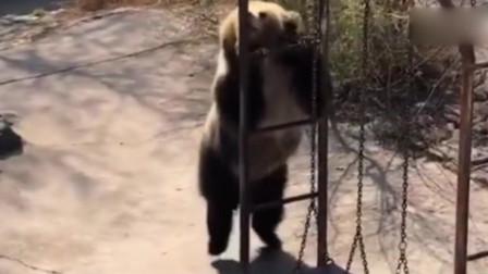 """领导视察我作为动物园的大哥,是时候来一段"""""""