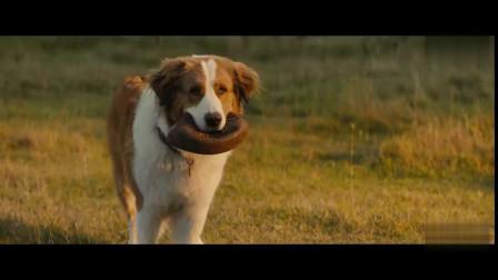 《一条狗的使命2》终极预告 一部献给所有狗主人的暖心童话