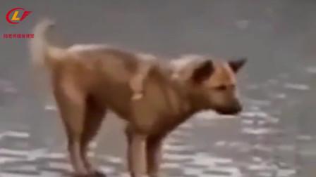 这是村里唯一去过酒吧的狗子!