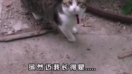 搞笑动物配音!你们稳住,不要笑