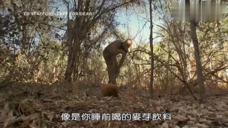 荒野求生 德哥在地上捡到营养食物 成功找到水源 这下爽歪歪了