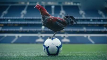 创意广告:热刺新球馆落成,雄鸡一鸣天下白!