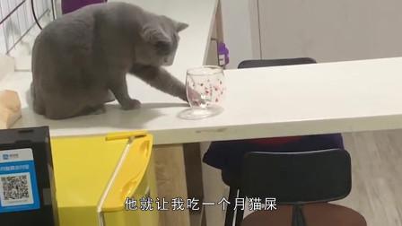 搞笑视频:主人说我要是再淘气就罚我吃一个月
