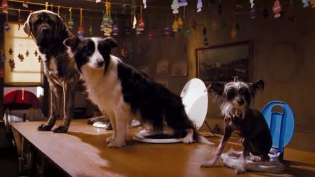 这里是流浪狗的天堂,连坐便器都这么酷, 一部