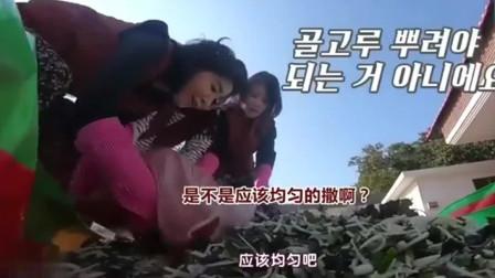 韩国女明星做泡菜,20斤辣椒面一下全放进去,一
