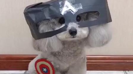 爆笑宠物视频大全 宠物搞笑视频集锦 喵星人汪星