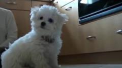 搞笑视频:主人学狗叫,狗子跟着摇头
