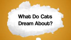 [搞笑动物沙雕集锦]萌猫做梦竟然跟我们是一