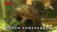 搞笑动物视频:作为一只乌龟 今天必须把清道夫