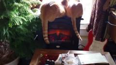 [搞笑动物沙雕集锦]最新!这里有猫!