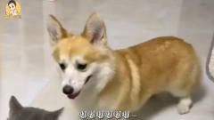 搞笑动物配音,当动物会说重庆话第十一期