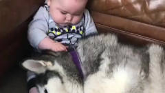 森妹妹娱乐探手:宝宝看着睡觉小狗狗的搞笑视