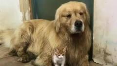 嘉琪的八卦马车:狗狗的搞笑视频,你知道么?