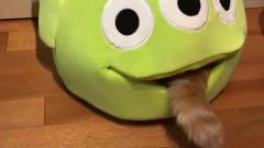 遥遥说美食:小猫猫进窝的搞笑视频,你知道么