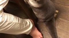 咕咕的生活理想:松鼠的搞笑视频,你知道么?