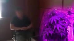 某王姓导演家里种大麻 被朝阳群众举报