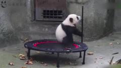 大熊猫:来,看看我这钢管舞跳的咋样,是不是
