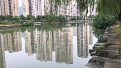高楼和河水相映特别有风景