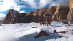 主人带家中哈士奇去大雪山玩,这风景好美