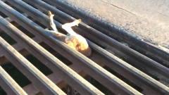 """小伙外出逛街,发现一双毛茸茸的""""美腿"""",拉"""