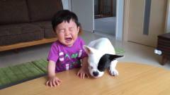 狗狗一口抢了萌娃的零食,宝宝气得大哭,下秒