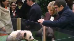 连法国第一夫人都敢吓?熊猫宝宝的脾气太大了