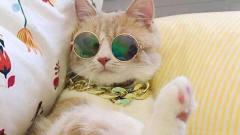 从猫咪的喝水姿势可以看出它的智商