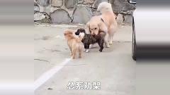 搞笑视频精选君:看看动物是怎么劝架的!
